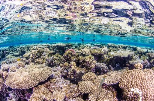 Underwater fine art (1)
