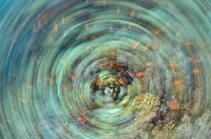 Underwater fine art (2)